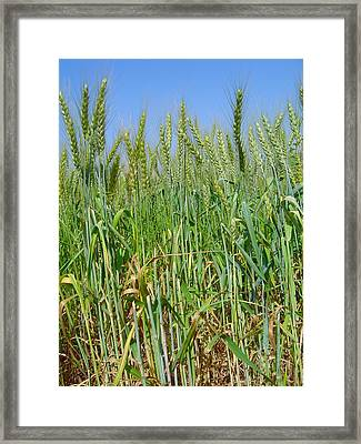 Our Daily Bread Framed Print by Anika Kanter