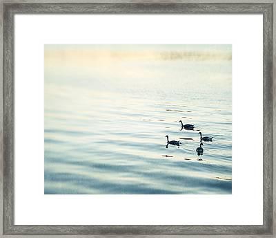 Out For A Swim Framed Print by Carolyn Cochrane
