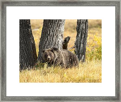 Out For Lunch Framed Print by Sandra Bronstein