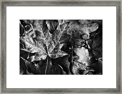Out In The Cold Framed Print by Christi Kraft