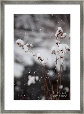 Softly Spoken Framed Print by Sue OConnor