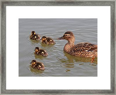 Out Of Line Framed Print by Gill Billington