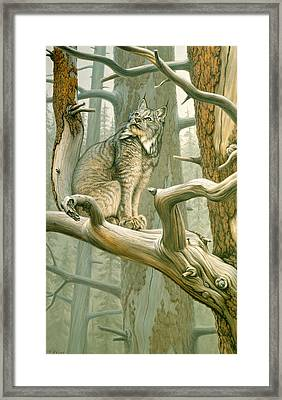 Out Of Reach - Lynx Framed Print by Paul Krapf