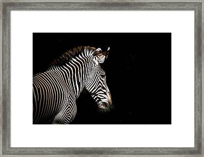 Out Of The Shadows Framed Print by Scott Mullin