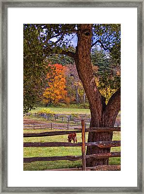 Out To Pasture Framed Print by Joann Vitali
