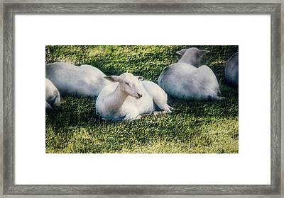 Out To Pasture Framed Print by Melanie Lankford Photography