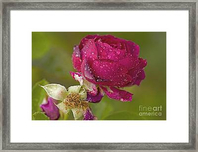 Out With The Old ... In With The New Framed Print by Nick  Boren