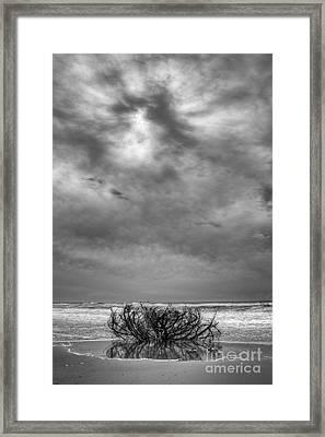 Outer Banks - Driftwood Bush On Beach In Surf IIi Framed Print by Dan Carmichael