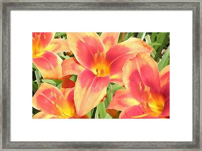 Outrageous Lilies Framed Print by Jean Hall
