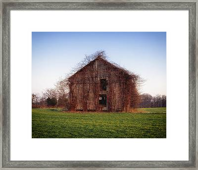 Overgrown Brush On Barn Framed Print by Mountain Dreams