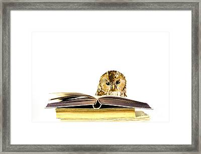 Owl At A Stack Of Books Framed Print by Kennerth and Birgitta Kullman