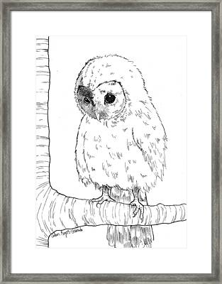 Owl Baby Framed Print by Callan Rogers-Grazado