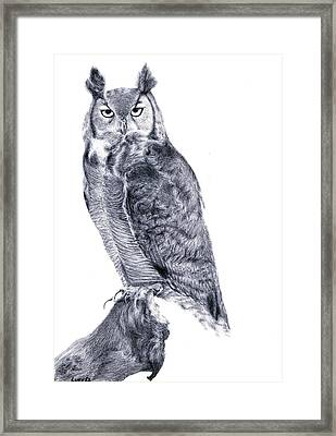 Owl Framed Print by Lucy D