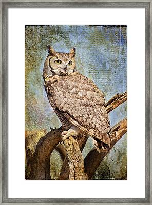 Owl On A Tree Framed Print by Barbara Manis