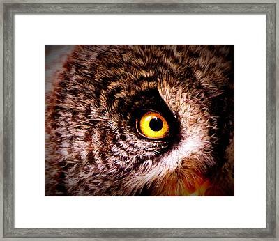 Owl's Eye Framed Print by Ramona Johnston