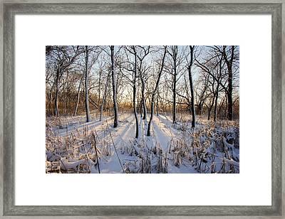Oxbow Park Golden Hour Framed Print by Jackie Novak