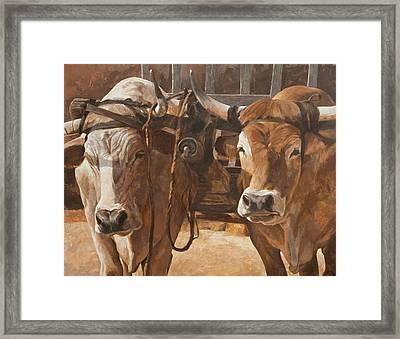 Oxen With Yoke Framed Print by Anke Classen