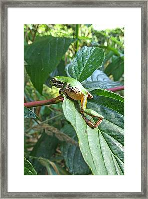 Oy . . .more Obstacles Framed Print by I'ina Van Lawick