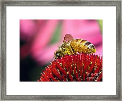 P2 The Pollenator Framed Print by Chris Anderson