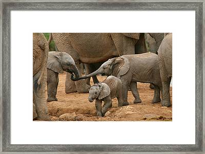Pachyderm Pals Framed Print by Bruce J Robinson