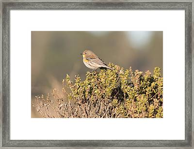 Pacific Sloped Flycatcher Framed Print by Natural Focal Point Photography