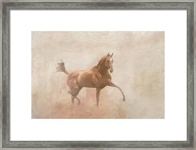 Paddyspartyboy Framed Print by Pamela Hagedoorn