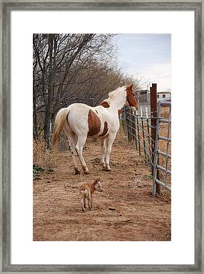 Paint And Heeler Framed Print by Thea Wolff