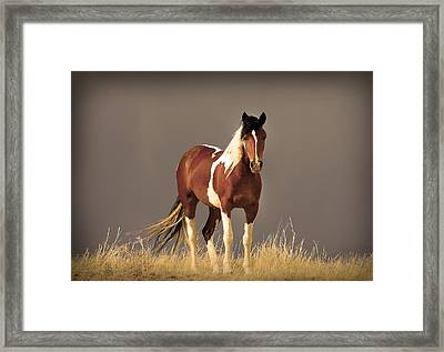 Paint Filly Wild Mustang Sepia Sky Framed Print by Rich Franco