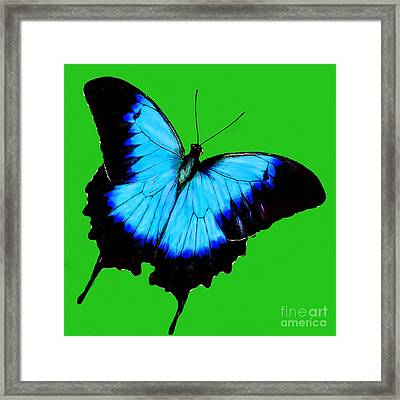 Painted Butterfly Framed Print by Bob and Nadine Johnston