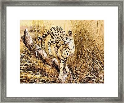Painted Cheetah Framed Print by Kristin Elmquist