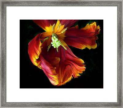 Painted Parrot Petals Framed Print by Jessica Jenney
