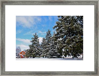 Painted Pines Framed Print by Frozen in Time Fine Art Photography