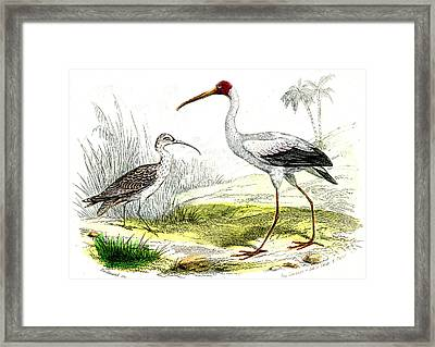 Painted Storks Framed Print by Collection Abecasis