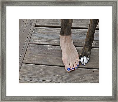 Painted Toenails And Dog Claws Framed Print by Harold Bonacquist