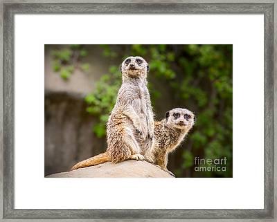 Pair Of Cuteness Framed Print by Jamie Pham