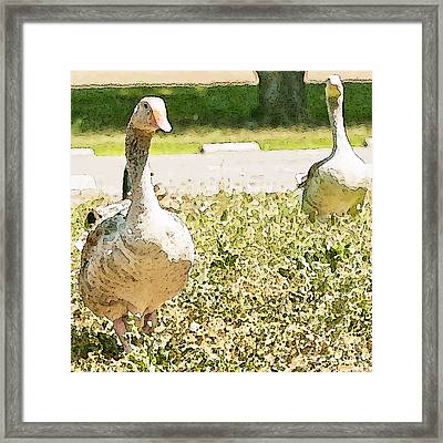 Pair Of Geese Framed Print by Artist and Photographer Laura Wrede