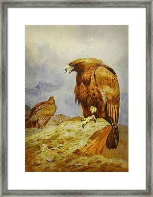 Pair Of Golden Eagles Framed Print by Celestial Images