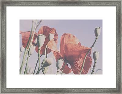 Pale Poppy Day Framed Print by Georgia Fowler