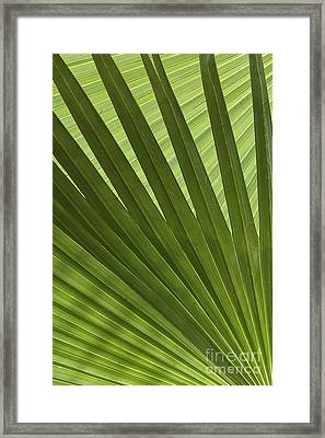 Palm Abstract Framed Print by Patty Colabuono