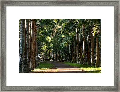 Palm Alley. Pamplemousse Botanical Garden. Mauritius Framed Print by Jenny Rainbow