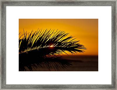 Palm Leaf In Sunset Framed Print by Yngve Alexandersson