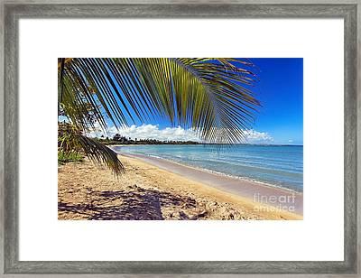 Palm Shadow II Framed Print by George Oze