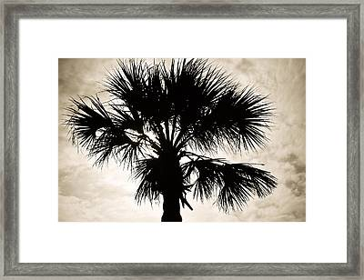 Palm Sihlouette Framed Print by Marilyn Hunt