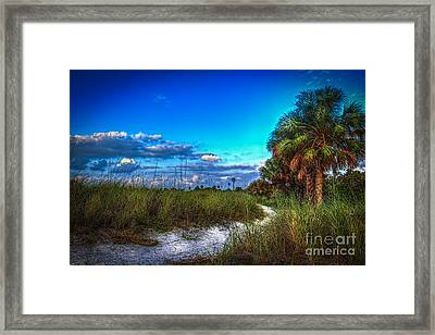 Palm Trail Framed Print by Marvin Spates