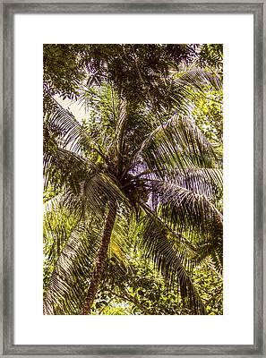 Palm Tree Breeze Framed Print by Melanie Lankford Photography