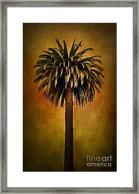Palm Tree Framed Print by Elena Nosyreva