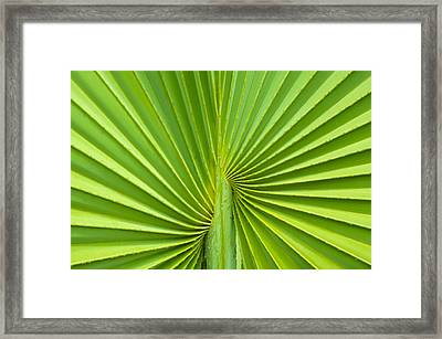 Palm Tree Leaf Background Framed Print by Aged Pixel