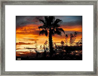 Palm Tree Paradise Framed Print by Matthew Heller