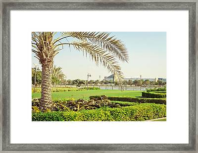Palm Tree Framed Print by Tom Gowanlock