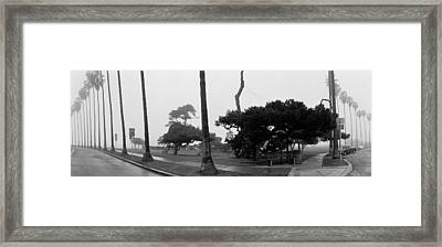 Palm Trees And Fog, San Diego Framed Print by Panoramic Images